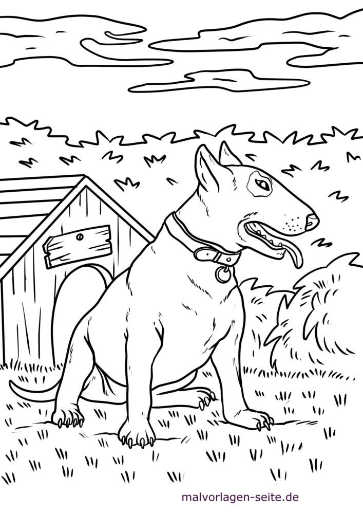 Coloring page pit bull / bull terrier