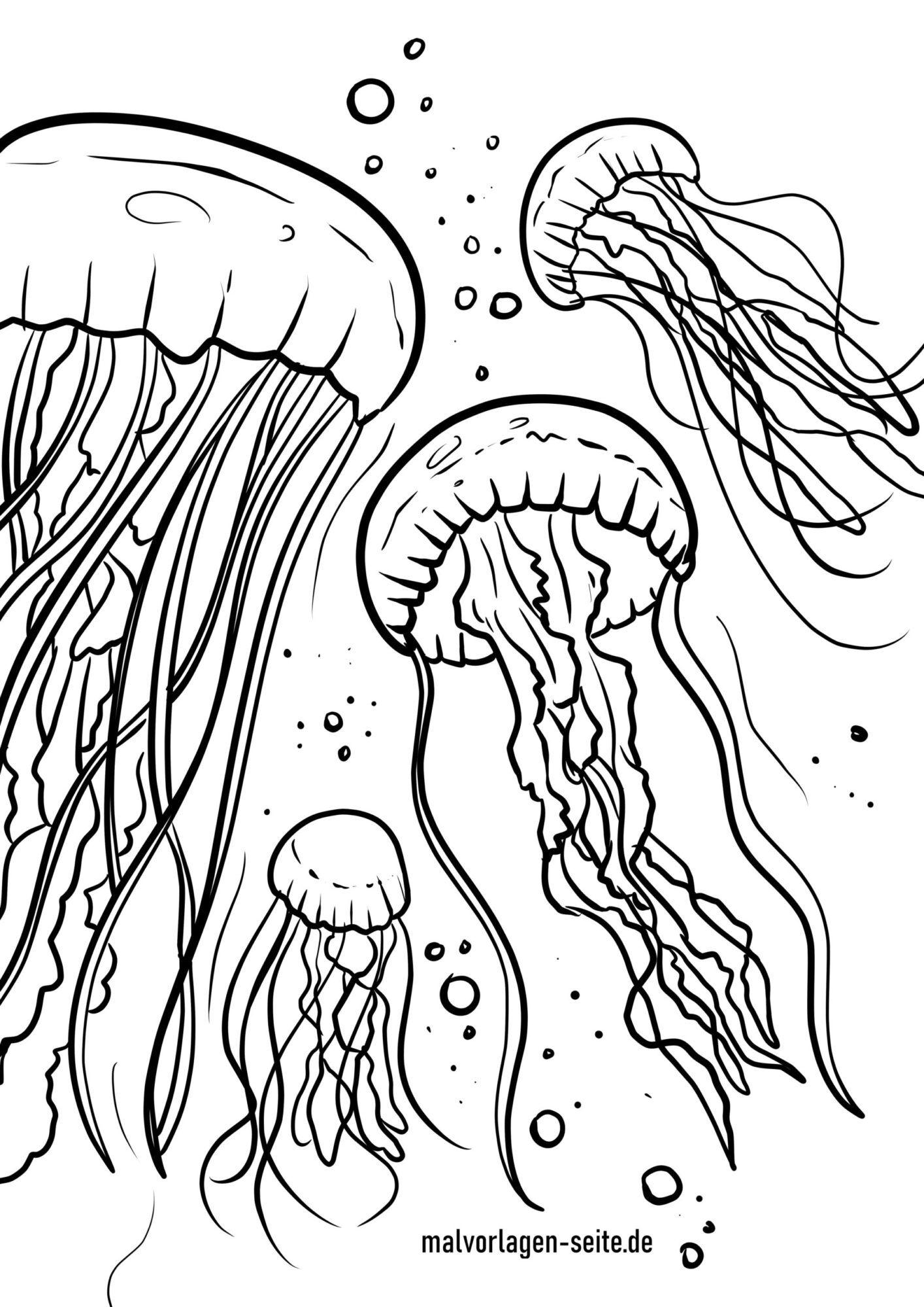 Värityskuva meduusa