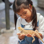 Reptiles from pet | Pets