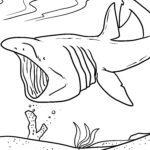 Coloring page basking shark | Sharks