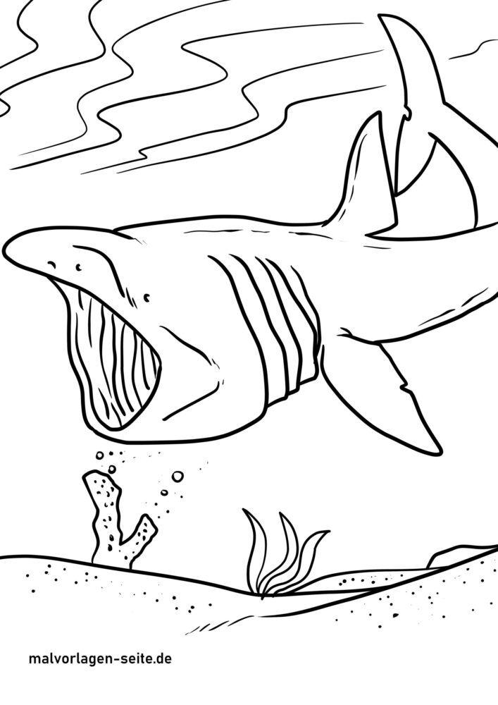 malvorlage riesenhai  haie  kostenlose ausmalbilder