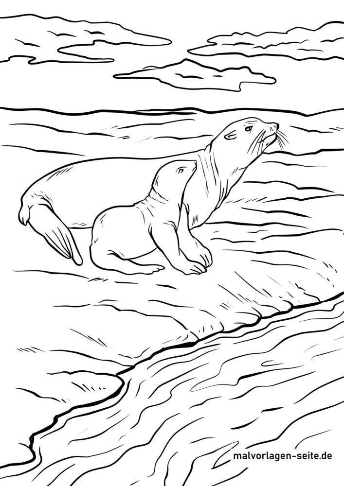 Coloring page Seal