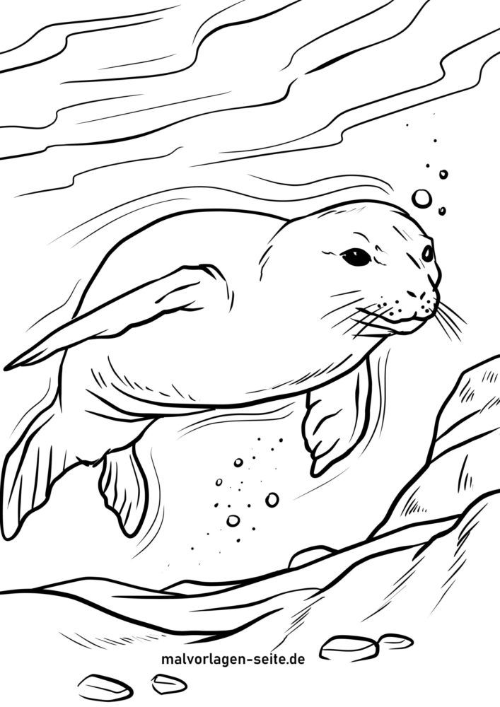 Coloring page seal in the water