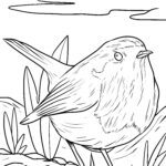 Coloring page robin
