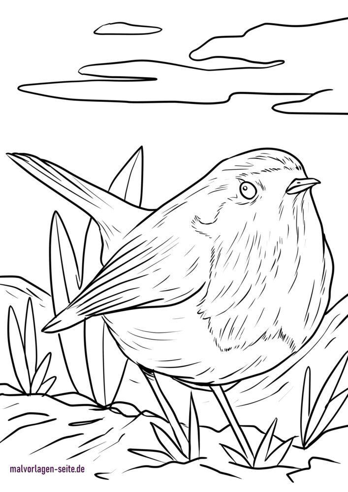 Dibujo para colorear robin