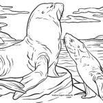 Bojanje stranice morski lav | Životinje u vodi