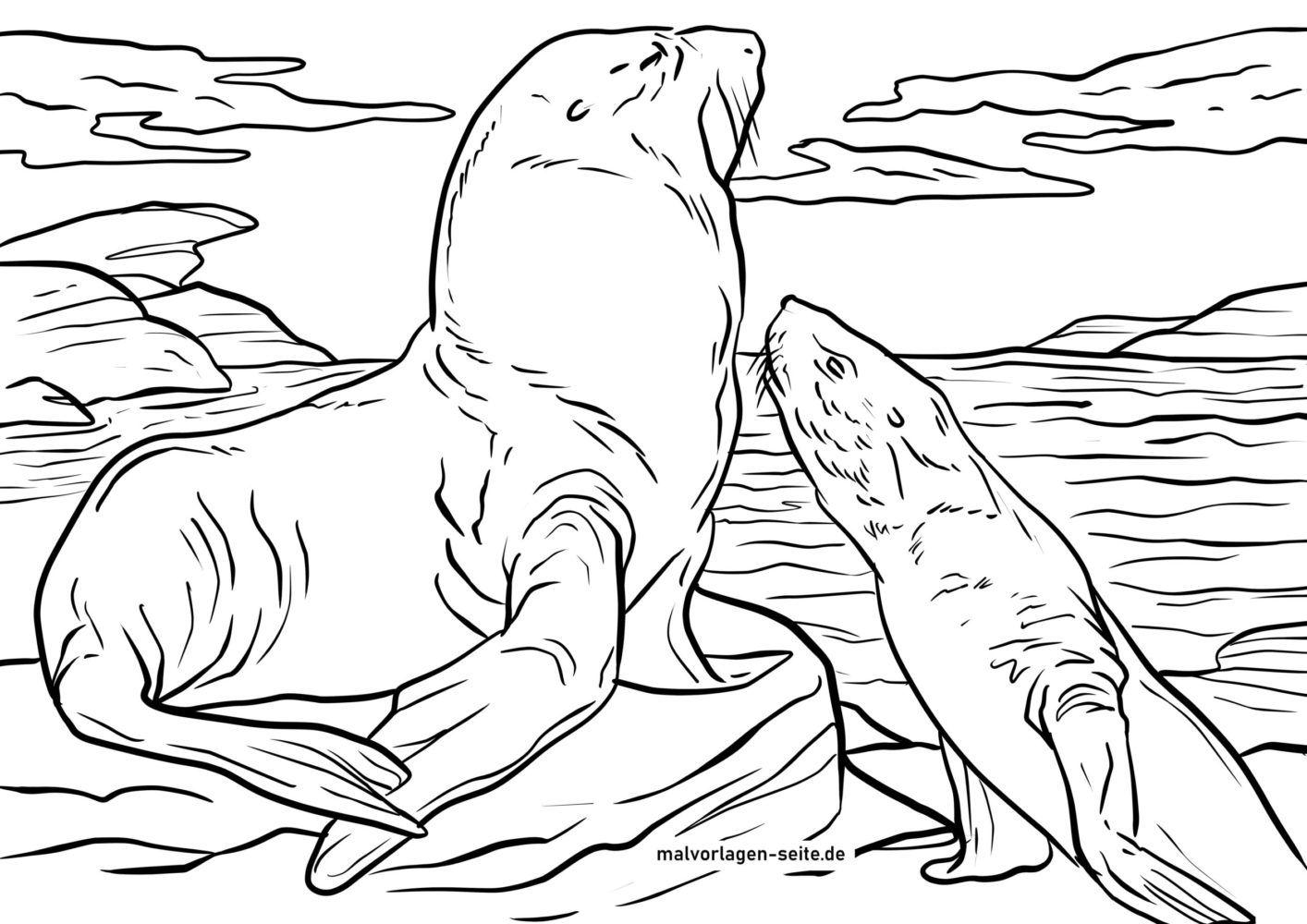 Գունազարդման էջը ծովի առյուծը
