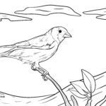 Coloring page goldfinch