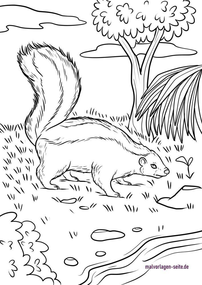 Coloring page Skunk