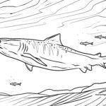 Tegninger til farvelægning tigerhaj | Hajer