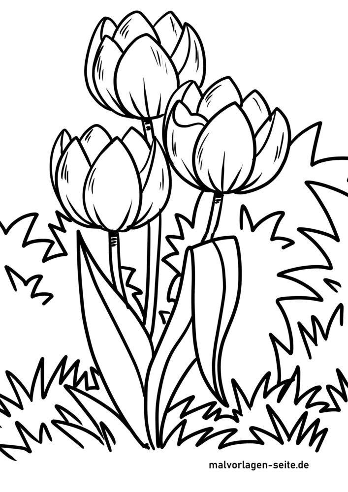 Coloriage tulipes