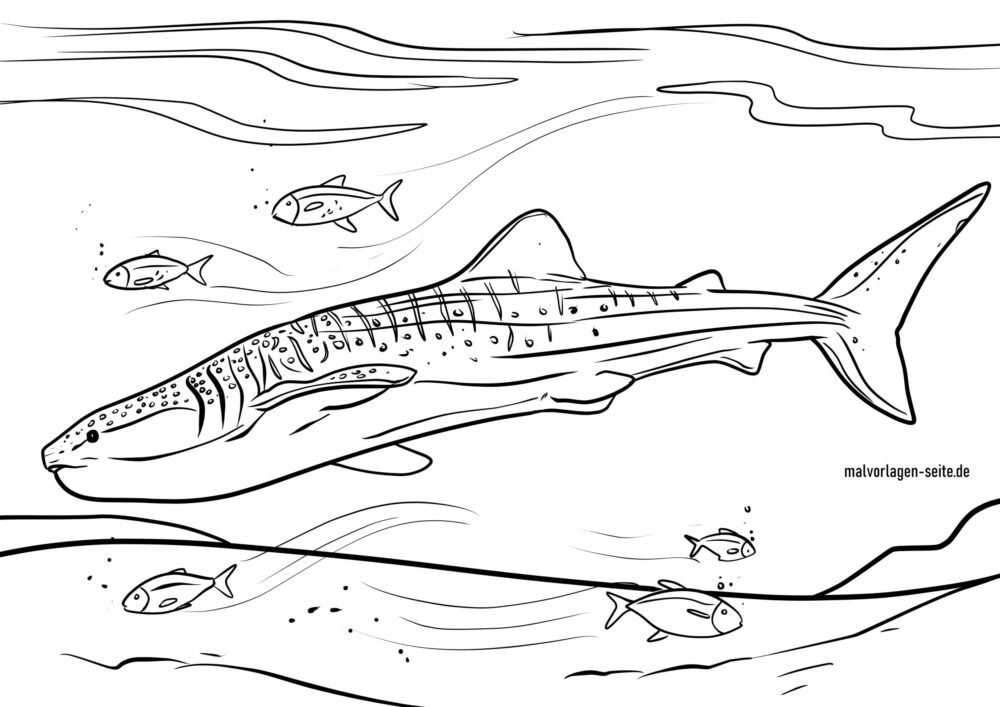 Coloring page whale shark