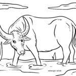 Omalovánky vodní buvol