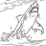 Stranica za bojanje veliki bijeli morski pas | Morski psi