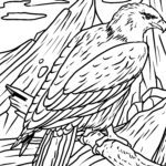 Coloring page bald eagle