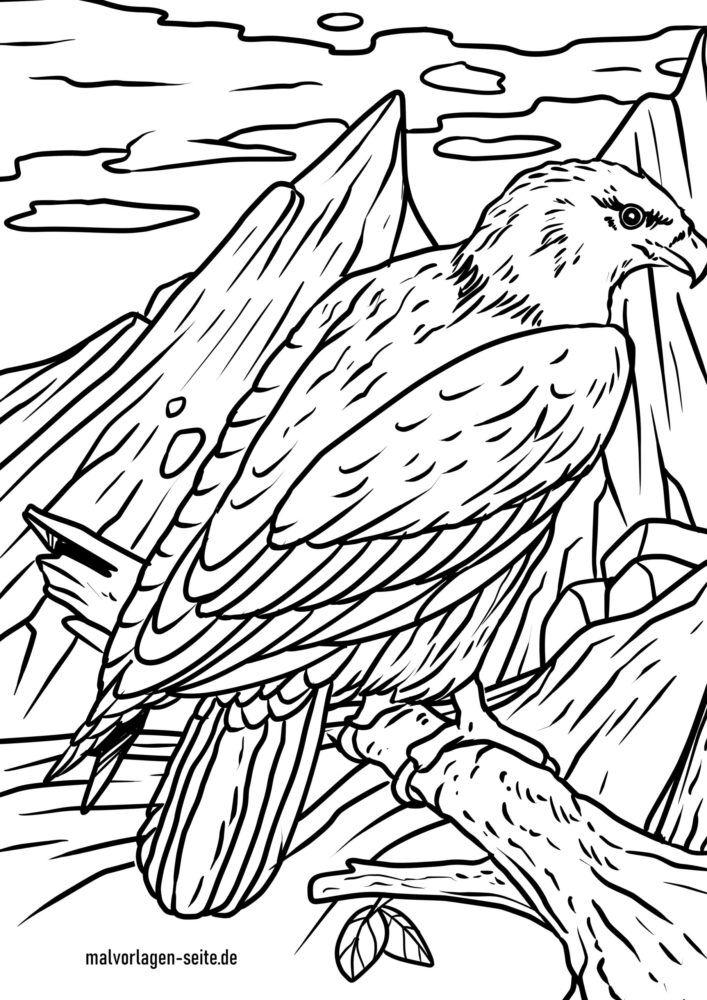 Omalovánky orel bělohlavý