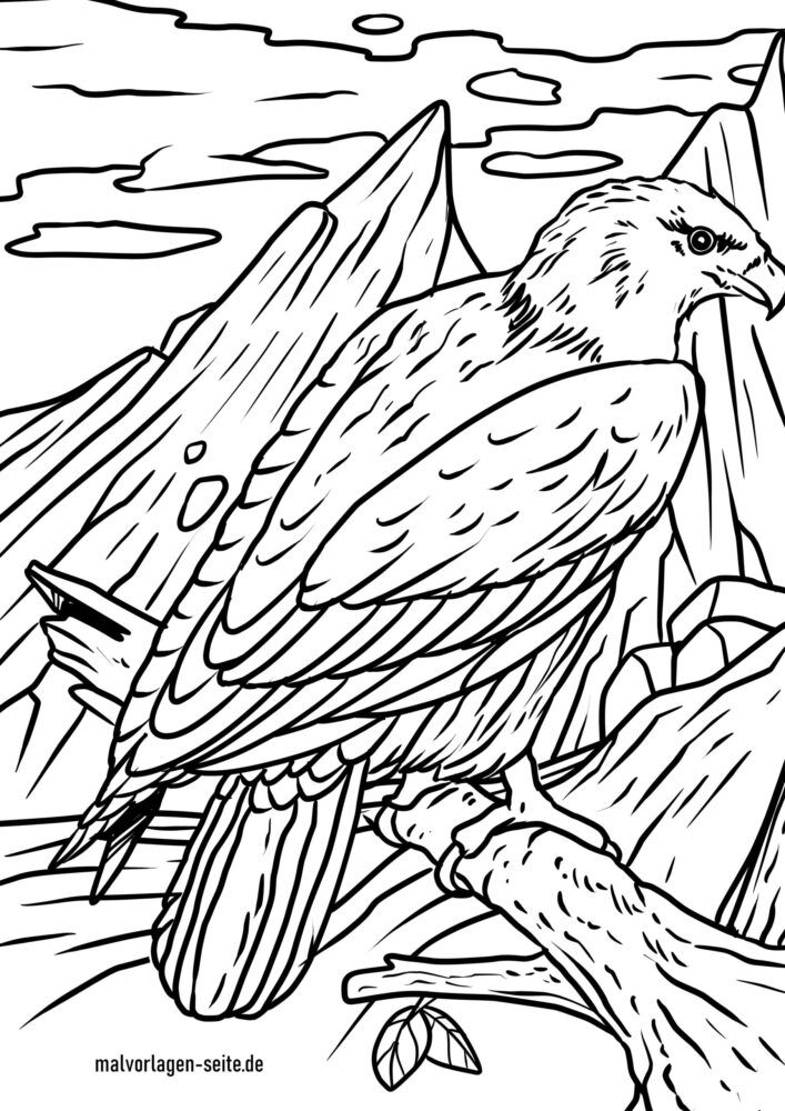 Coloring page bald eagle