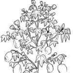 Coloring page cotton