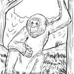 Coloring page bonobo - monkey