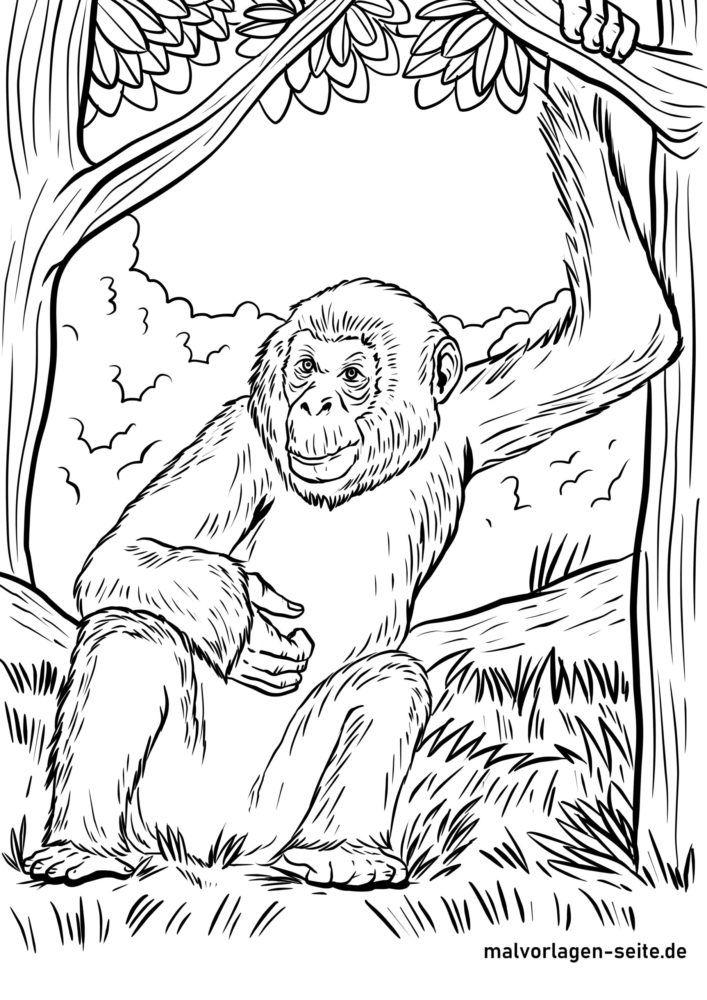 Coloring page bonobo