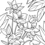 Coloring page Christmas rose