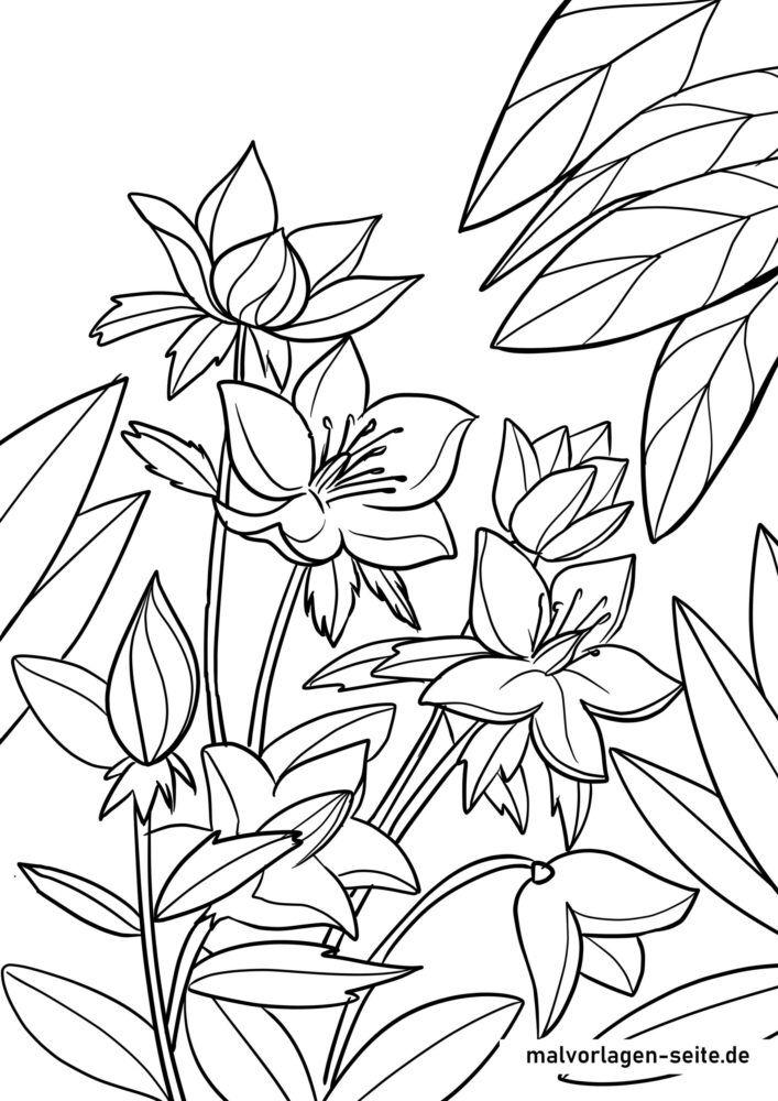 ausmalbilder pflanzen  kostenlose ausmalbilder