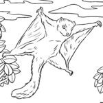Coloring page flying squirrel