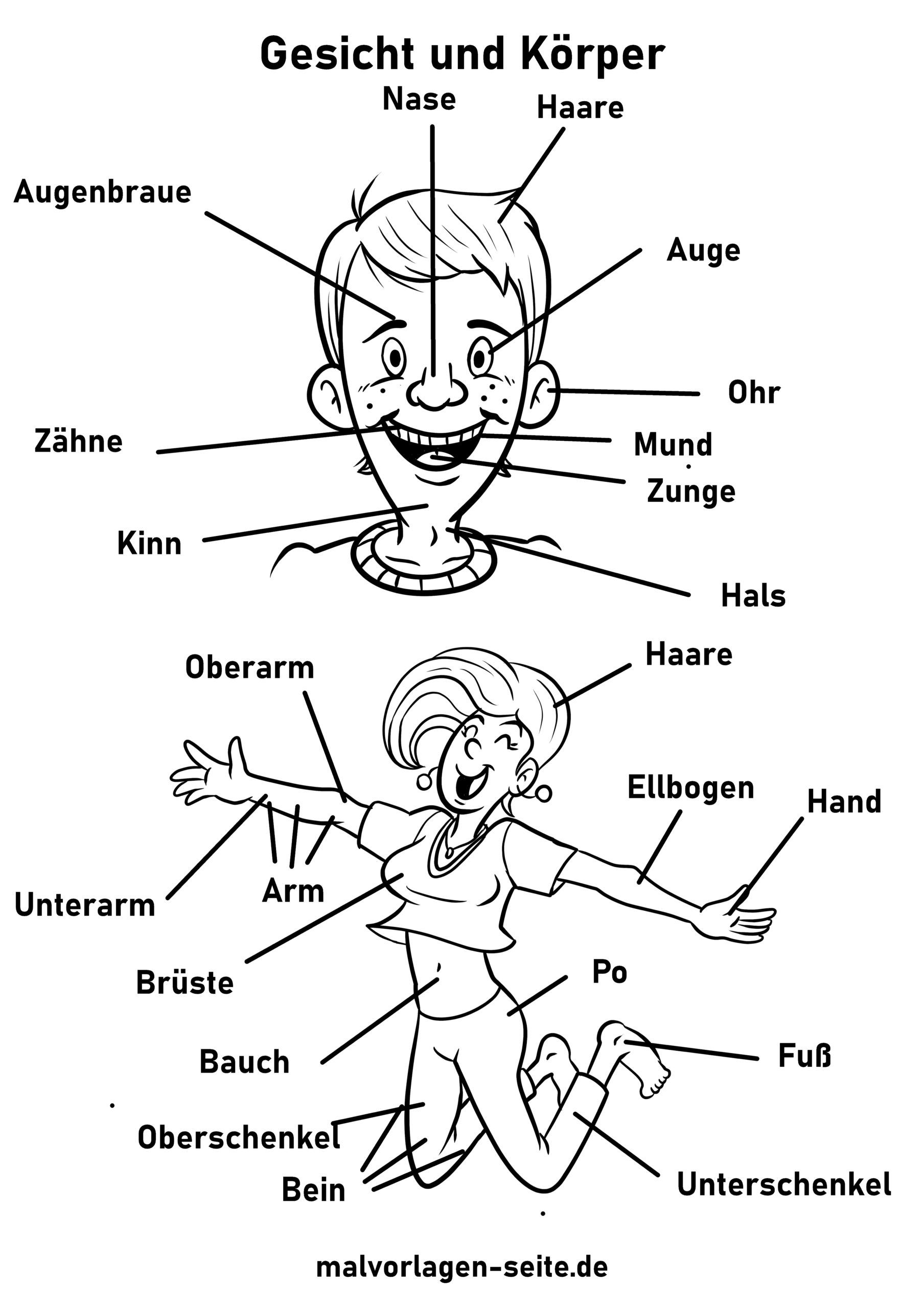 Face and body worksheet