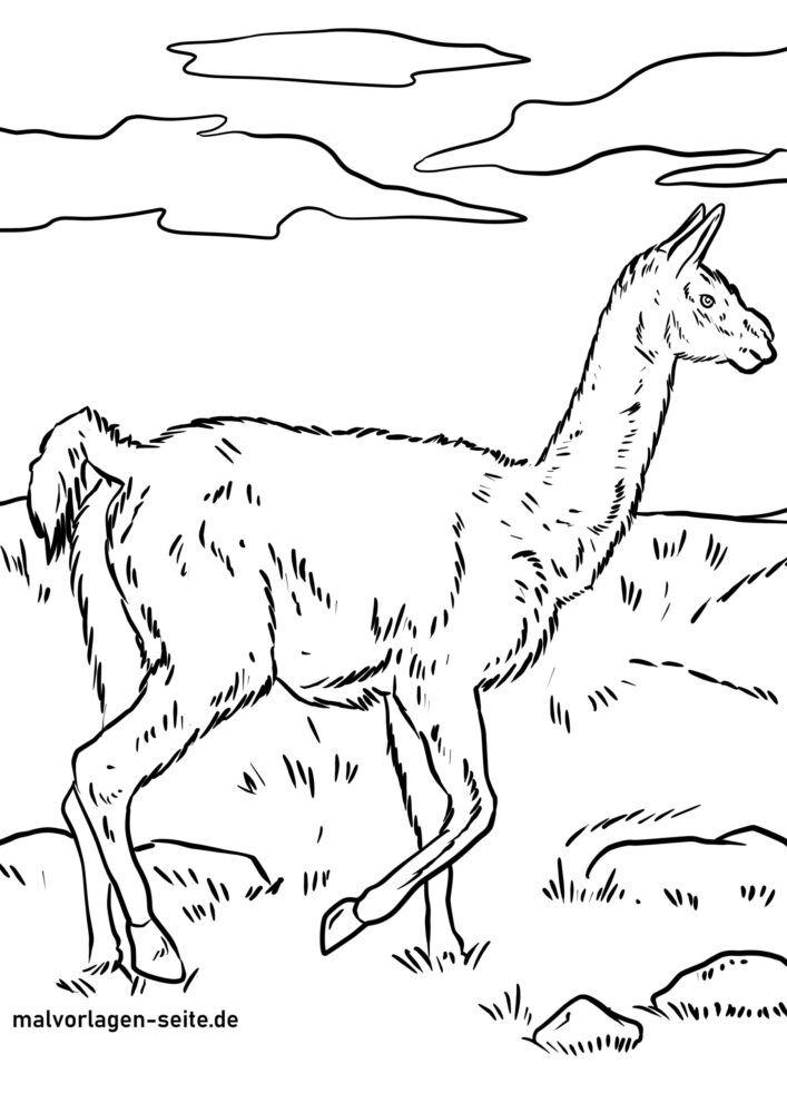 Koloriga paĝo guanaco
