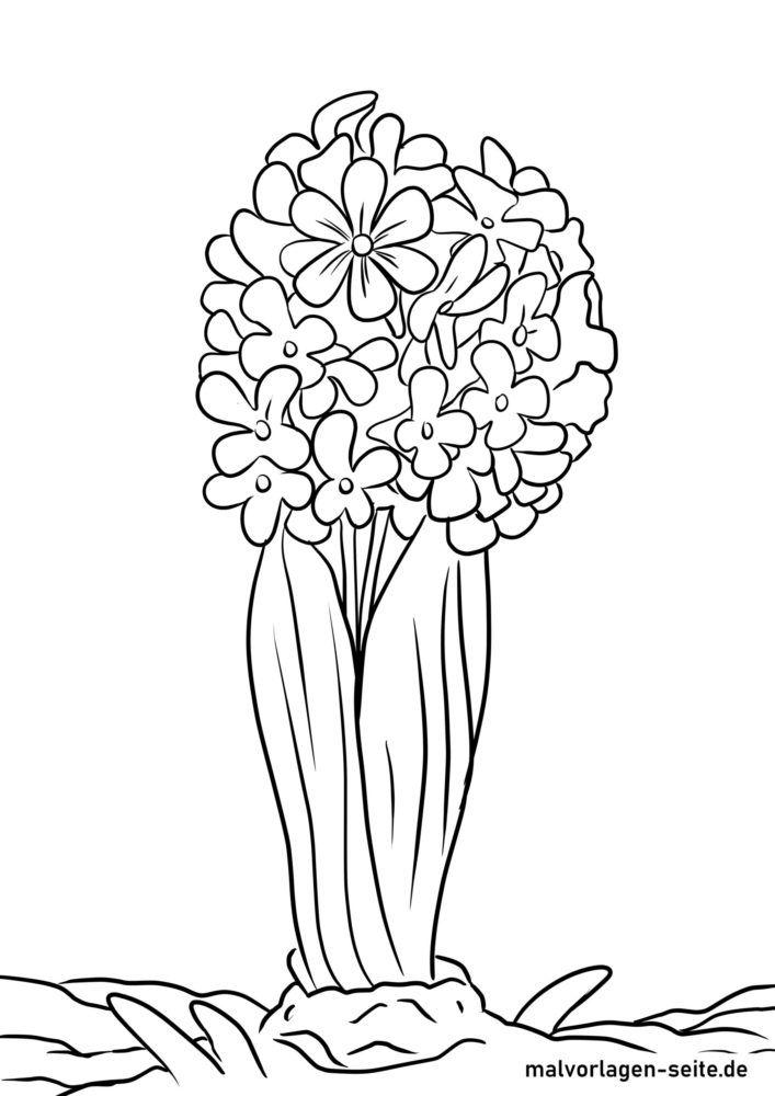 Tegninger til farvelægning hyacint
