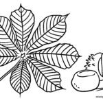 Coloring page chestnut and chestnut leaf