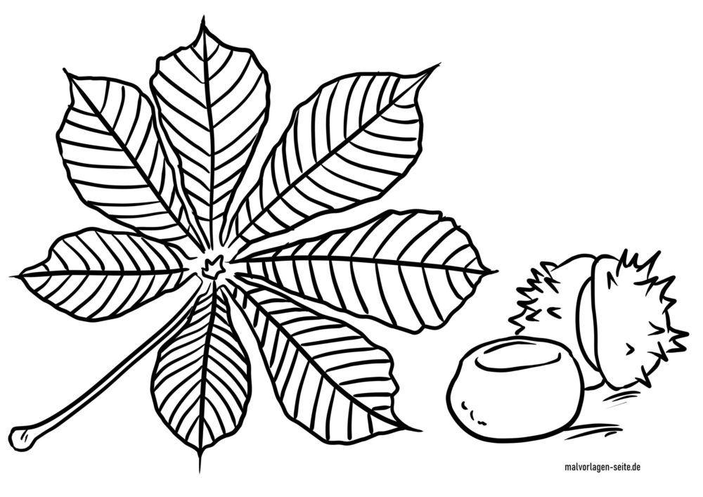 Tegninger til farvelægning kastanje og kastanjeblad