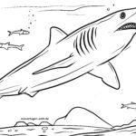 Värityskuva Mako Shark