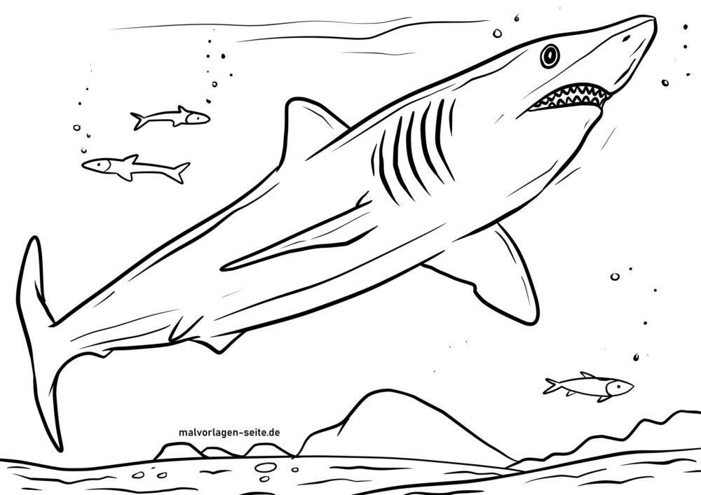 malvorlage mako hai  tiere im wasser  kostenlose