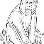 Coloring page monkey - monkey