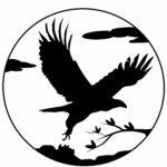 Silhuet / silhuet af rovfugl