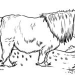 Värityskuva Shetlanninponi - eläimet ratsastamassa