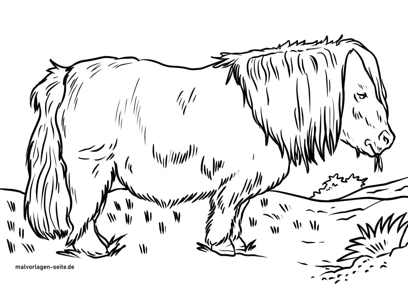 Tolle Malvorlage Shetlandpony - Tiere Reiten - Kostenlose Ausmalbilder