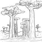 Tegninger til farvelægning baobab træ