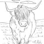 Pejy fandokoana highland omby - highlander