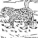 Dibujo para colorear jaguar