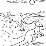 Χρωματισμός σελίδα καγκουρό - ζώα