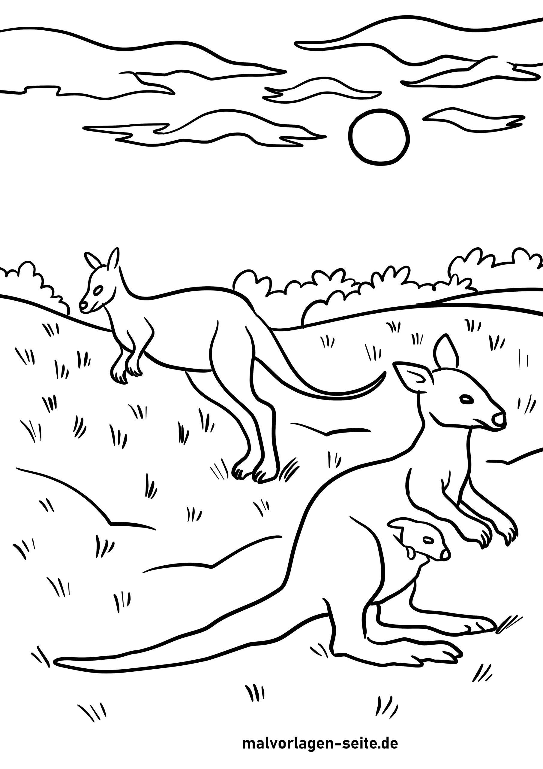 דף צביעה קנגורו