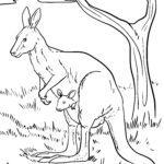 Размалёўка гіганцкі кенгуру