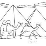 Malvolage camel - mga hayop