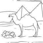 Kolora paĝo kamelo - bestoj