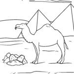 Размалёўка вярблюд - жывёлы