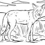 Zbarvení stránky kojot