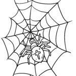 Coloring page garden spider - spider