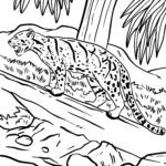 Páxina para colorear leopardo empañado